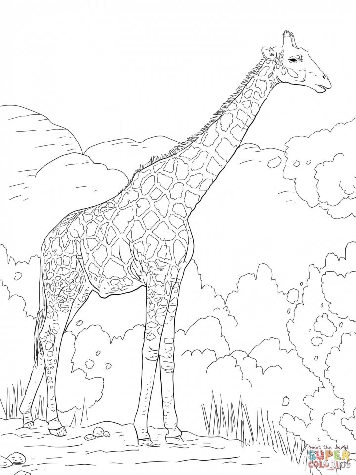 get this realistic giraffe coloring pages for adults 66218