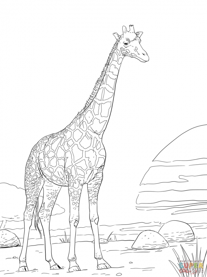 Get This Realistic Giraffe Coloring Pages For Adults 74916 Giraffe Coloring Page