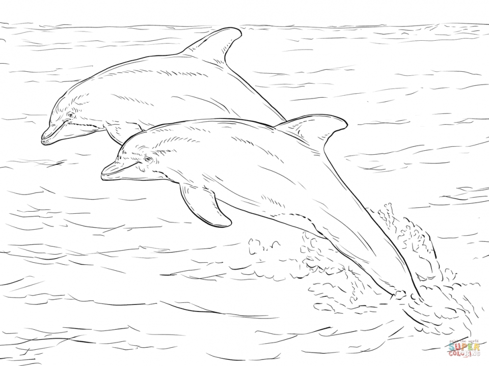 Get this sea animal coloring pages of dolphin to print 28501 for Free printable dolphin coloring pages