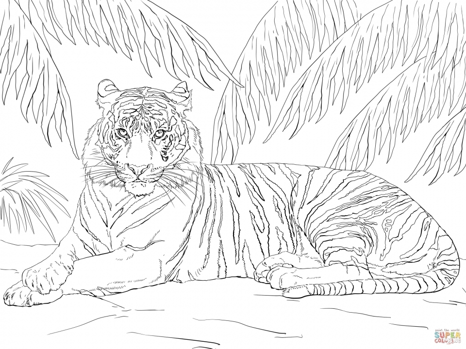 Get This Tiger Coloring Pages for
