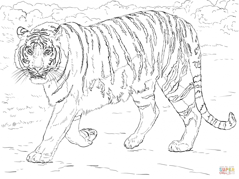 Intricate Cat Coloring Pages : Intricate cat coloring pages for adults animal