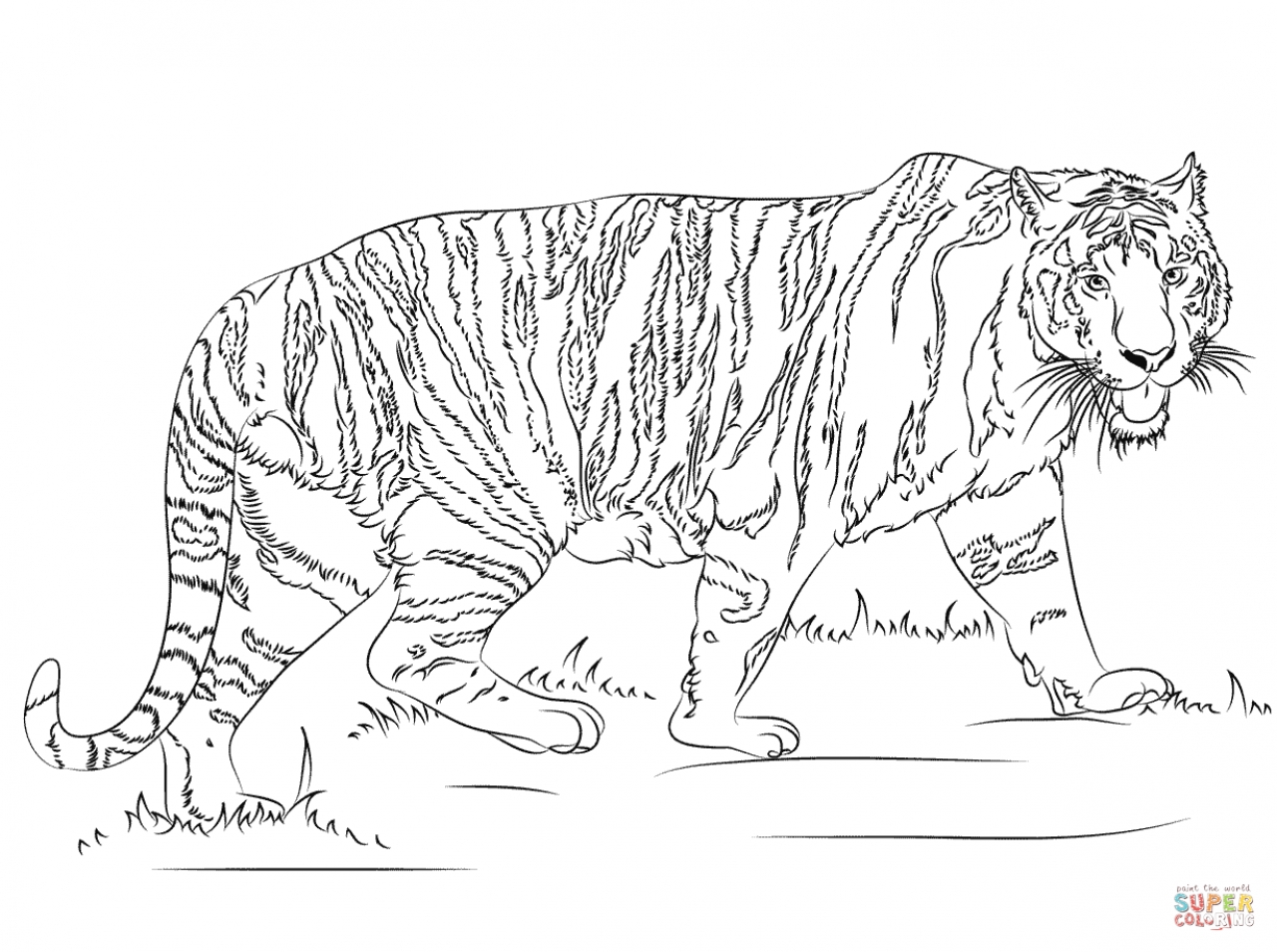 Get this tiger coloring pages printable 90426 for Coloring pages of tiger