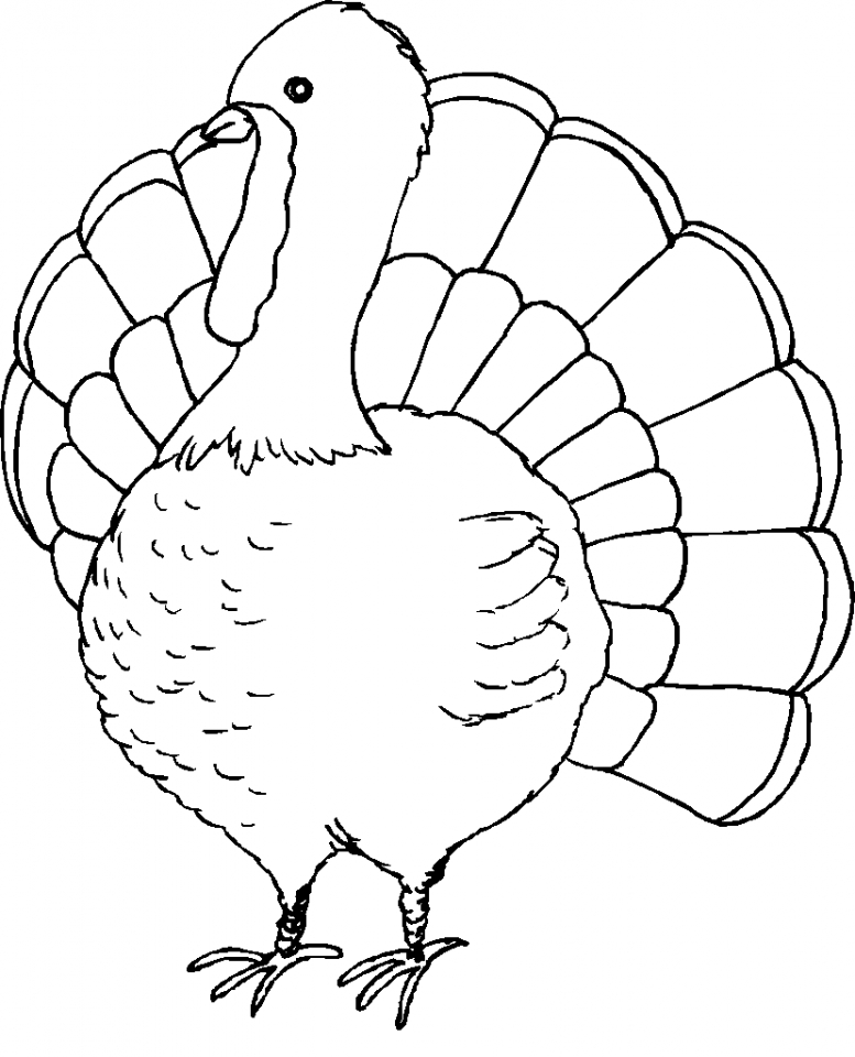 Turkey coloring pages for preschoolers 41552