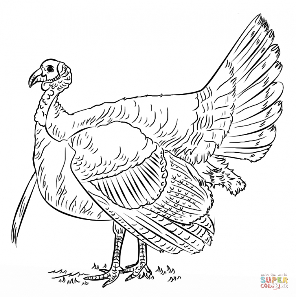 Get This Turkey Coloring Pages Kids Printable 31775 !