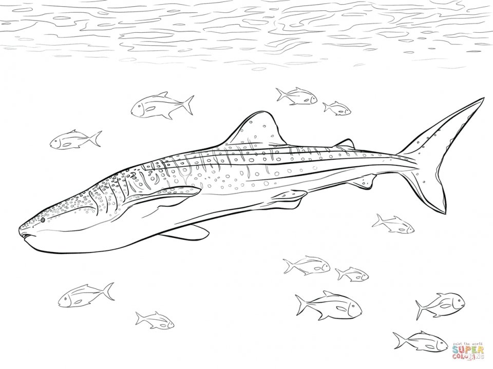 Get This Whale Shark Coloring Pages 67317