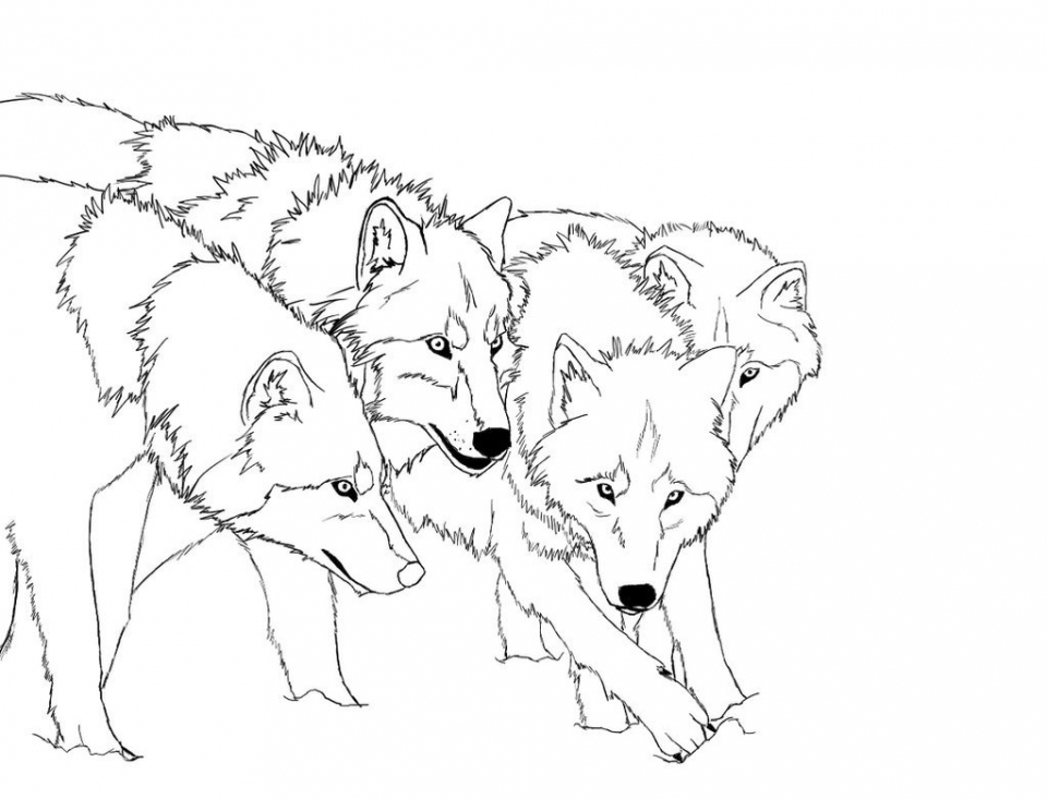 Get this wolf coloring pages free to print 31332 for Free printable wolf coloring pages