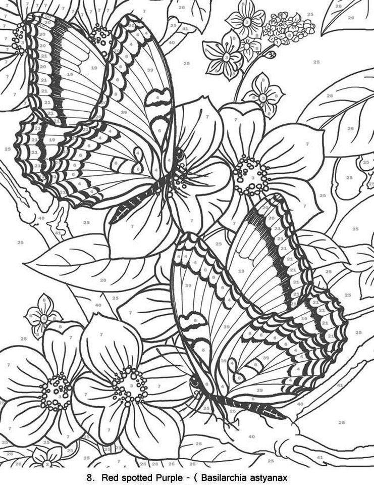 advanced coloring pages of butterfly for adults 56172