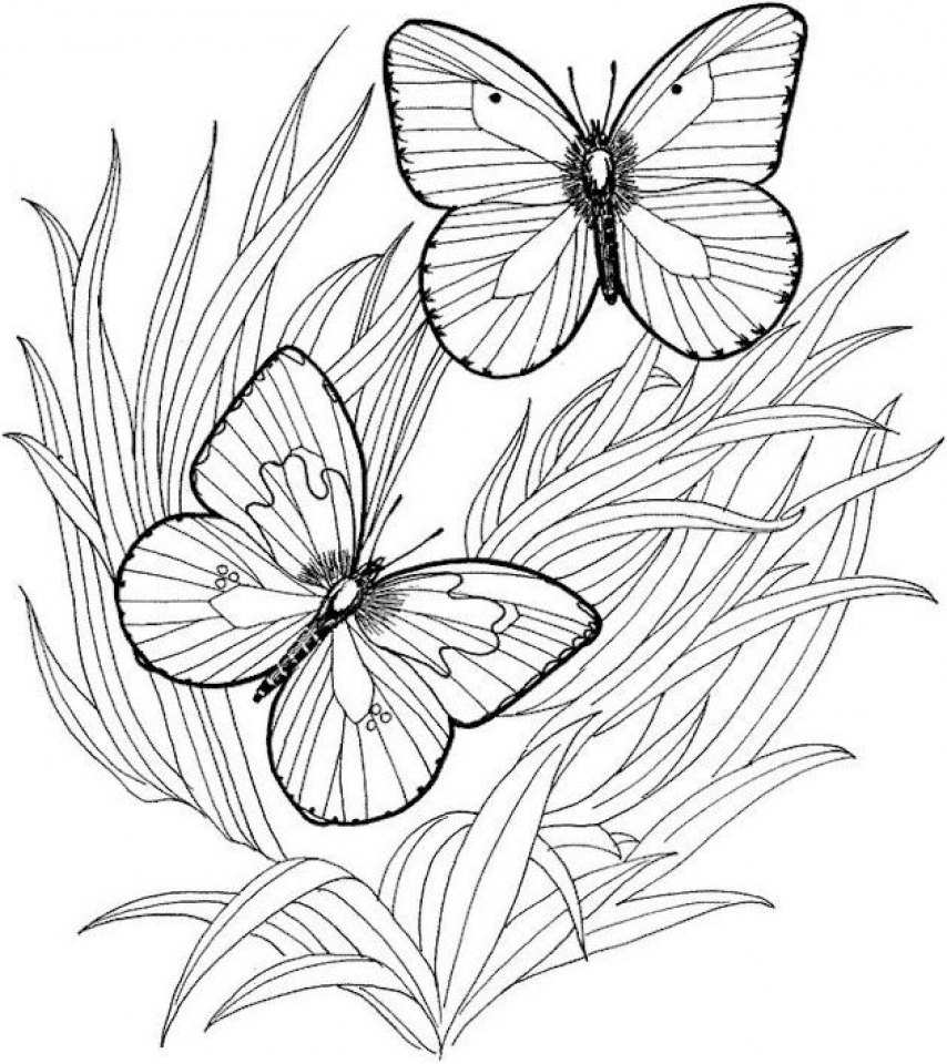 Get this adult butterfly coloring pages to print at46f for Coloring pages of butterflies for adults