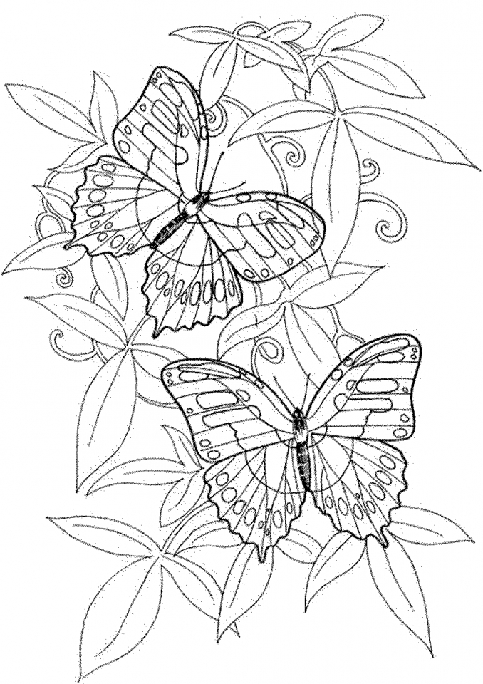 Get This Adult Coloring Pages Of Butterfly Printable 9ghj6