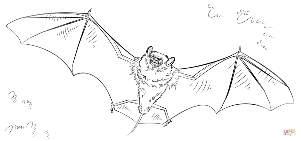 Bat Coloring Pages Free Printable   90956