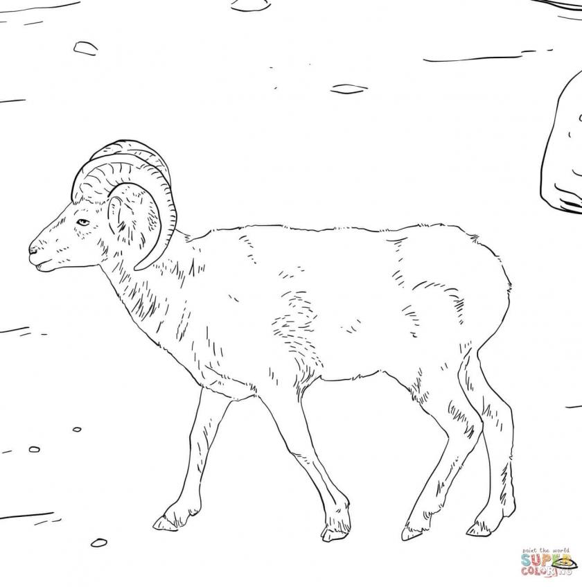 Get This Bighorn sheep coloring pages wat2n !