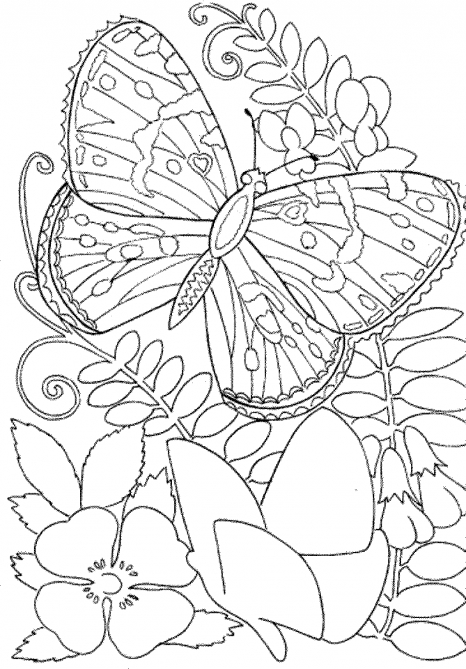 Get this butterfly coloring pages to print for adults 90037 for Coloring pages of butterflies for adults