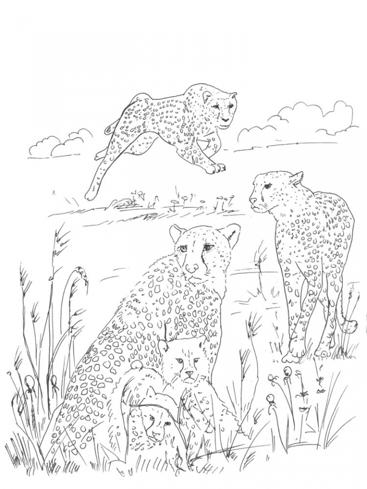 Get This Cheetah Coloring Pages to Print 7xb3m