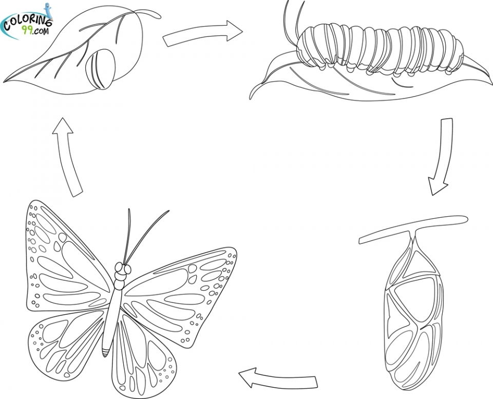 Get This coloring pages butterfly life cycle 2jg09 !