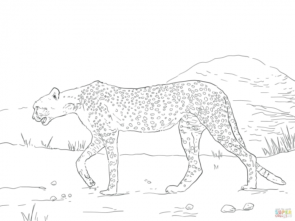 Get This Free Printable Cheetah Coloring Pages Bgu5l
