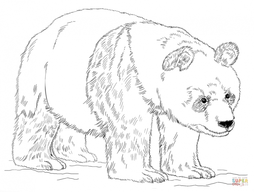 Get This Panda Bear Coloring Pages