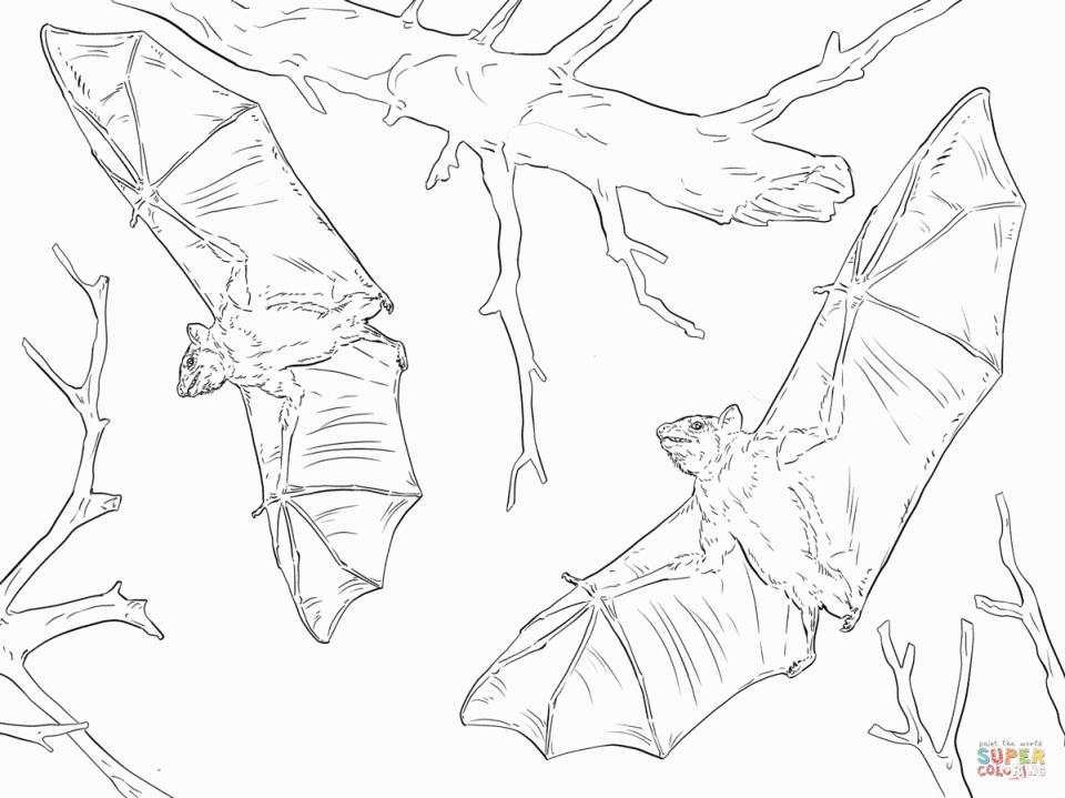 Get This Realistic Bat Coloring Pages Printable 85167