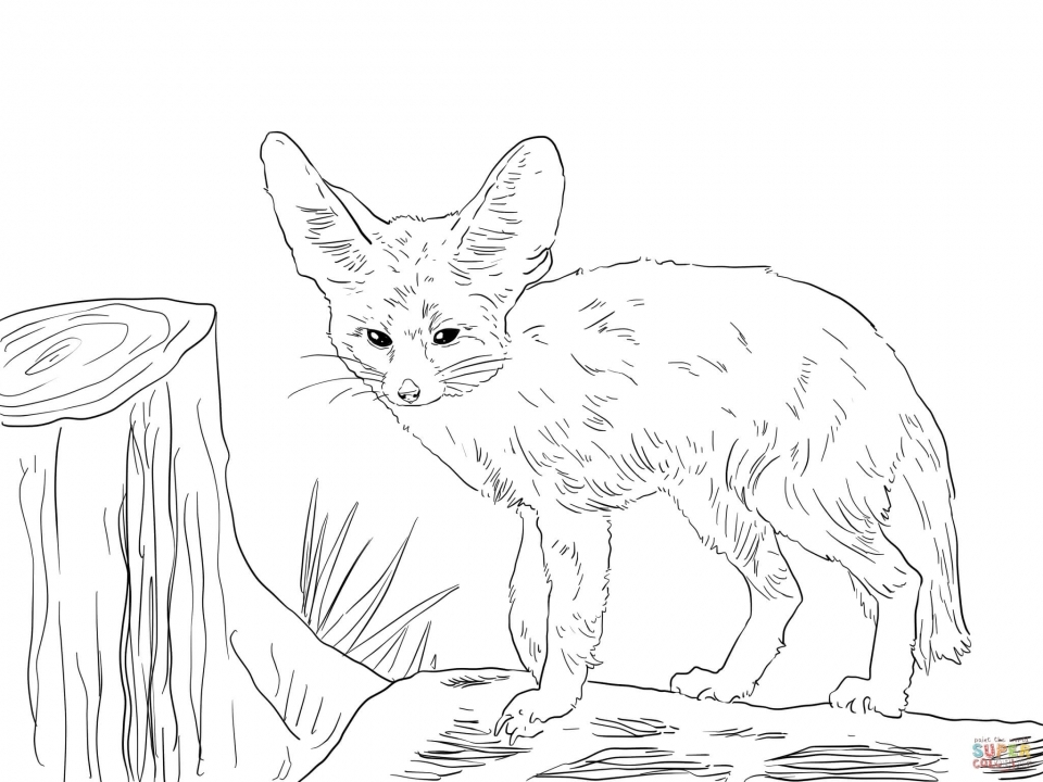 Get This Realistic Fox Coloring Pages Free Pler5