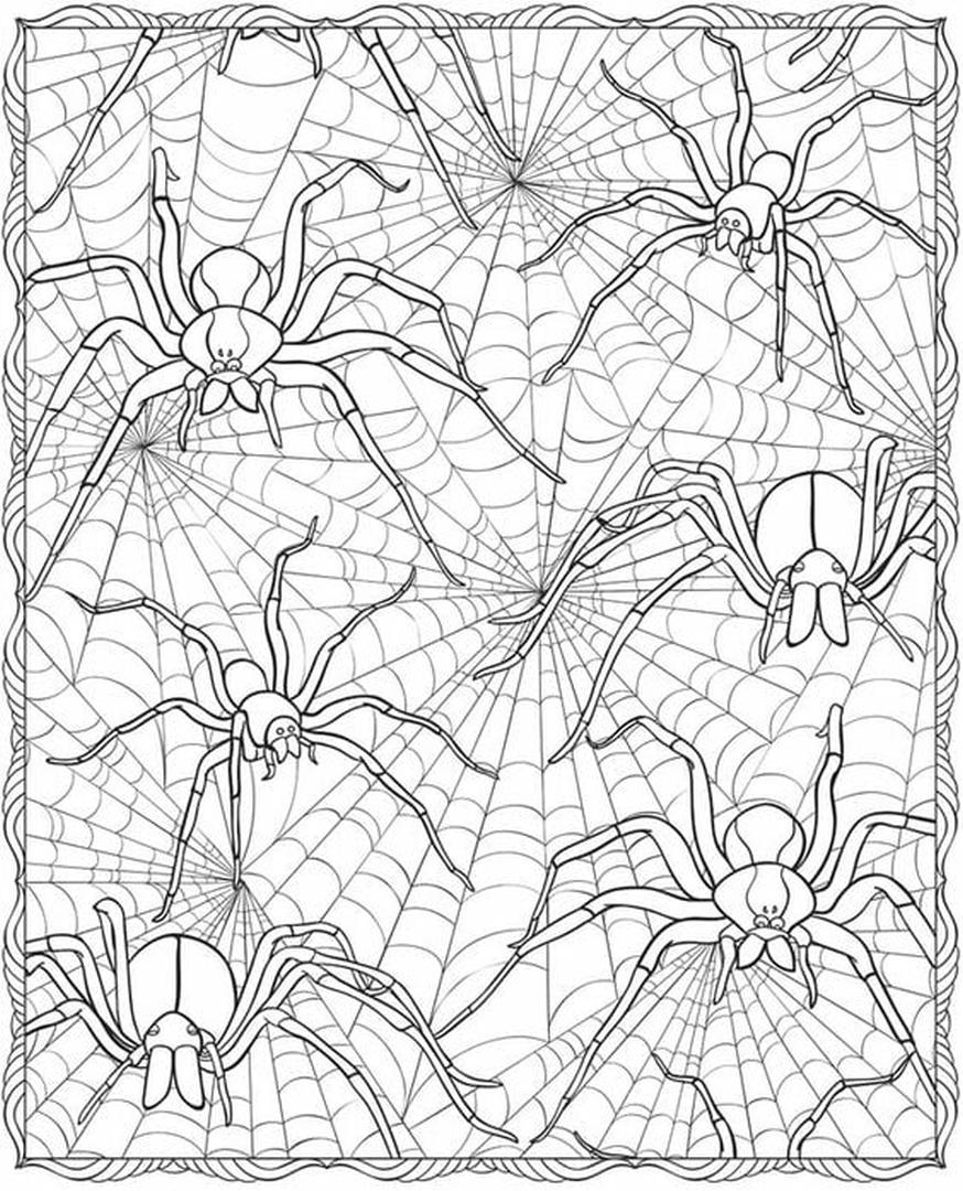 Get This Adult Halloween Coloring Pages Spider Web 6spw