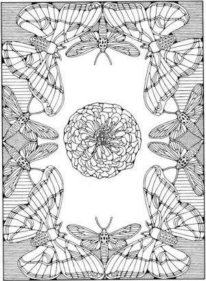 Advanced coloring pages of Butterfly for Adults – 89678