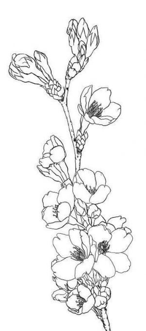 Coloring Pages Cool Designs for Teenagers A Branch of Cherry Blossoms