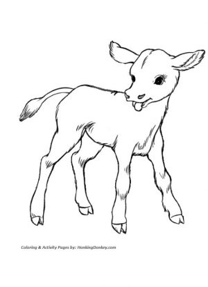 Cow Animal Coloring Pages Baby Cow Drawing for Kids