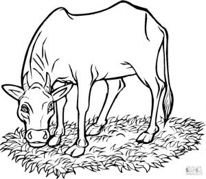 Cow Coloring Pages to Print Cow Eating Grass