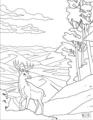 Deer Coloring Pages A Drawing of White Tailed Deer