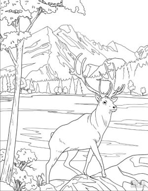 Deer Coloring Pages Realistic Deer Drawing for Older Kids