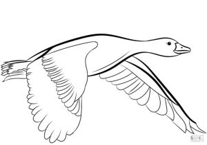 Duck Coloring Pages Flying Duck