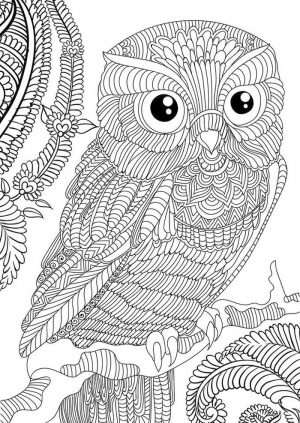 Owl Adult Coloring Pages Free Printable or94