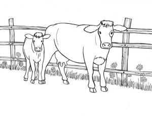 Realistic Cow Animal Coloring Pages Cow and Her Calf In a Farm