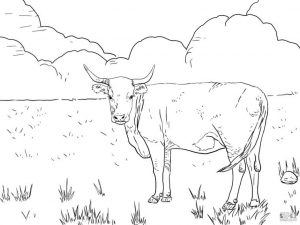 Realistic Cow Coloring Pages to Print Longhorn Cow