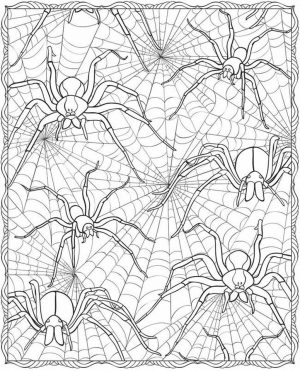 Spider Coloring Pages for Adults 13rt