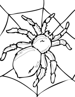 Spider Coloring Pages for Adults 49js