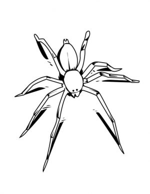 Spider Coloring Pages for Kids 6lt7