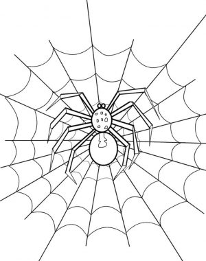 Spider Living in Her Web Coloring Page to Print for Free glk8