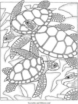 Summer Coloring Pages to Print Out for Adults – 83201