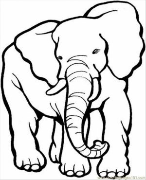 African Elephant Coloring Pages Free Printable   5678093