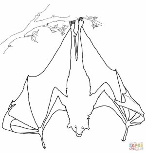 Bat sleeping upside down coloring page   14416