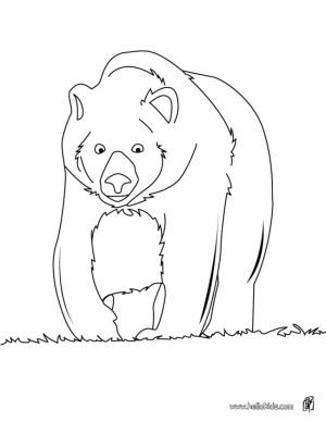 Bear Coloring Pages for Toddlers   65789