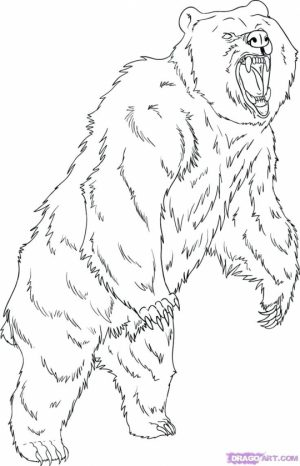 Bear Coloring Pages to Print   64173