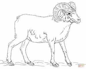 Bighorn sheep coloring pages   ywp8v