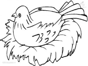 Bird Coloring Pages Free Kids Printable   41663