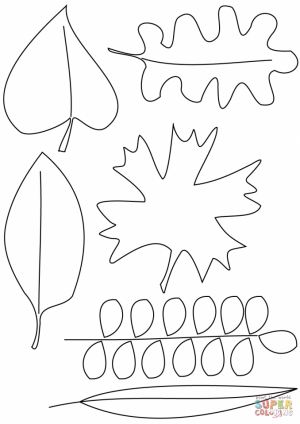 Blank Leaf Coloring Pages for Kids   ycv31