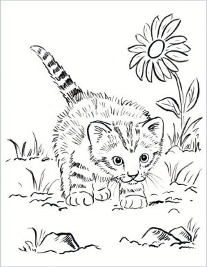 cat coloring pages for kids cv48d