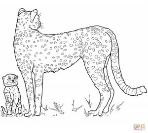 Cheetah Coloring Pages Free to Print   7ag31