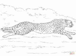 Cheetah Coloring Pages Free to Print   ycv3m