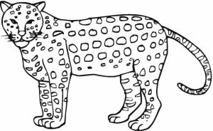 Cheetah Coloring Pages Free   ycn3m
