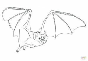 Coloring pages of a bat for kids   10561